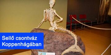 Múzeumi kiállítási darabok