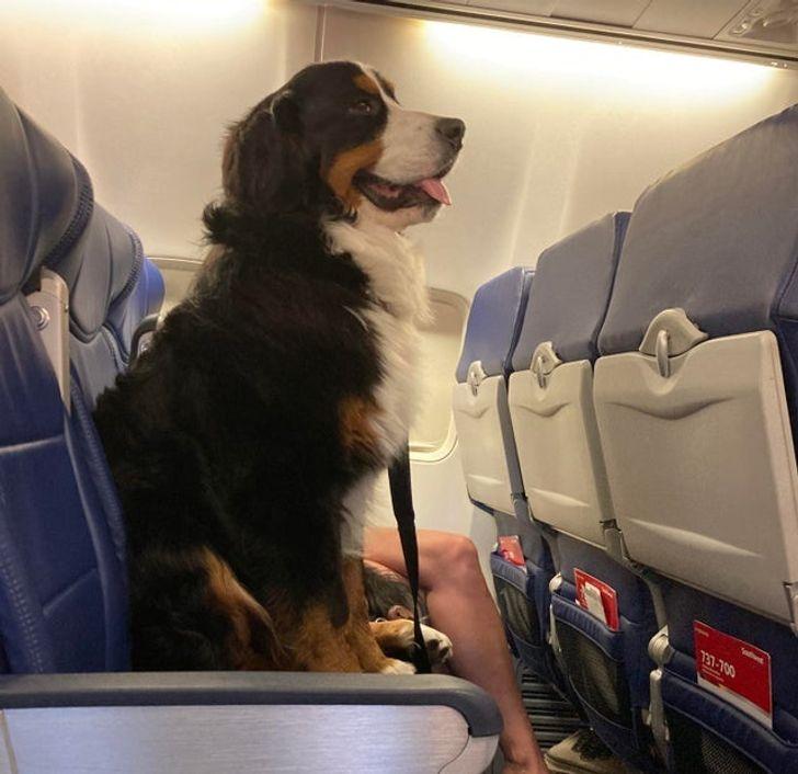 Repülési szabályok