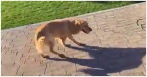 Tetore maszo kuty