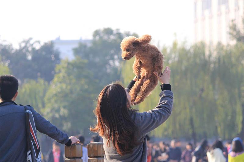 Kína kutya