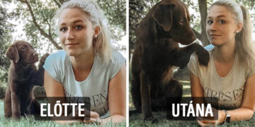 Kutyák előtte és utána