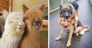 Állati legjobb barátságok