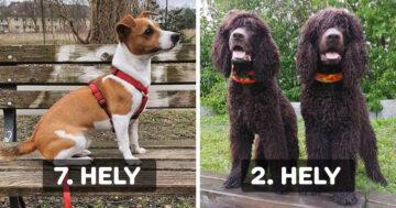 Aranyarány szerinti kutyák
