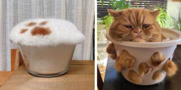 Folyékony macskák