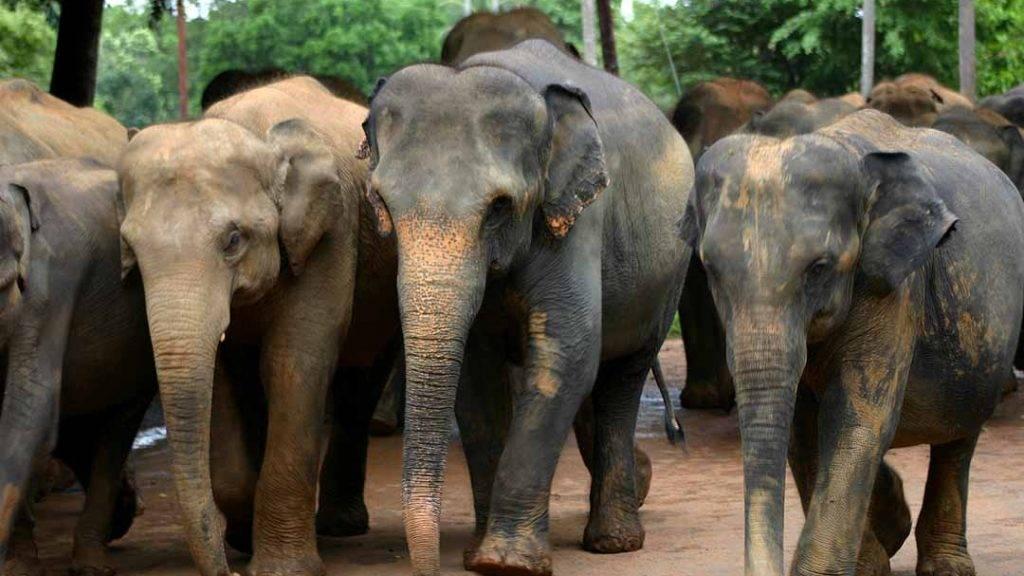 sri lanka elephants 03 e1499427546901 1024x576