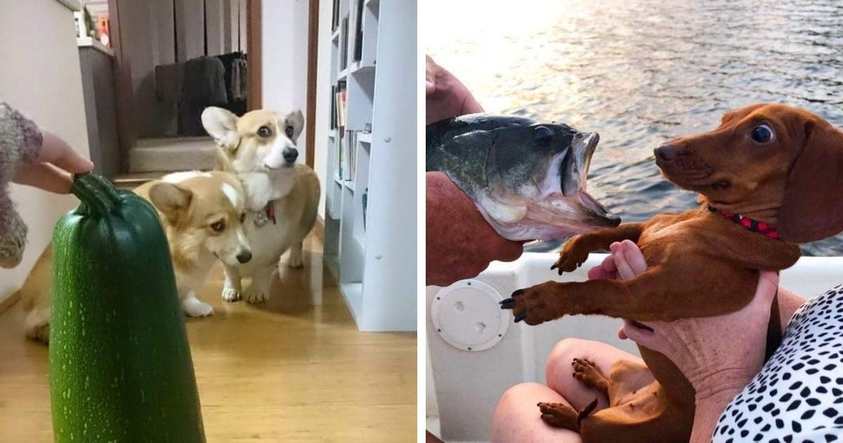 Megijedt kutyák