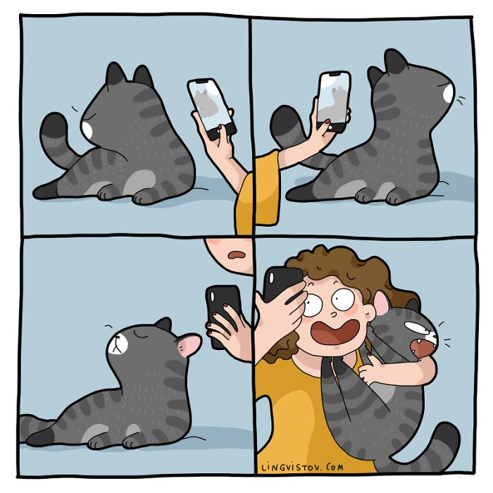 Fotogen macska