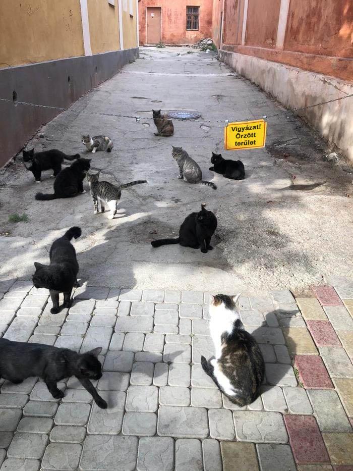 Orzott terulet macskak
