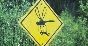 Szúnyogok