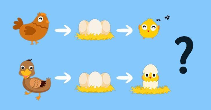Tyúk és tojás kérdés