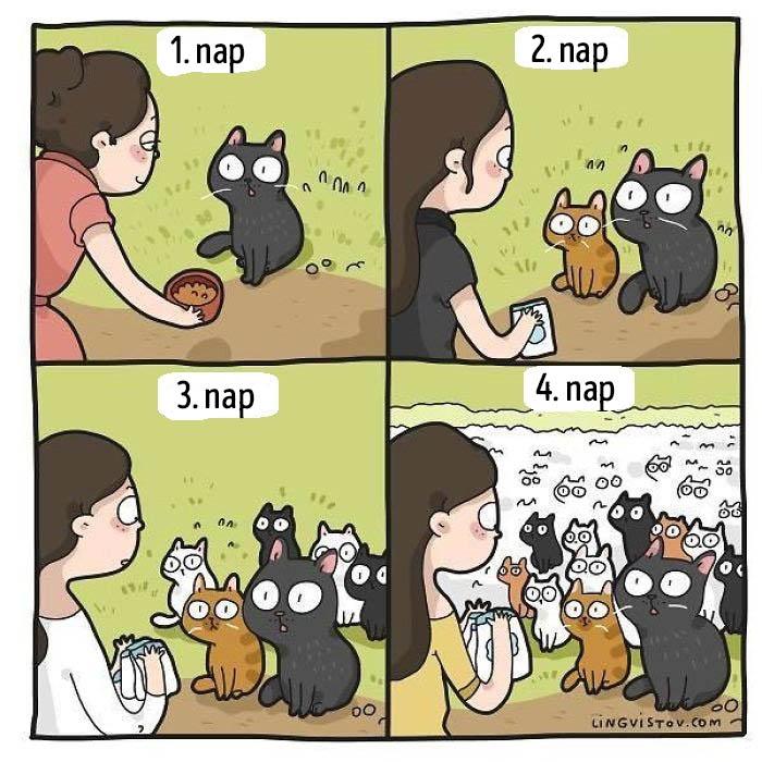 Vicces macska kepregeny