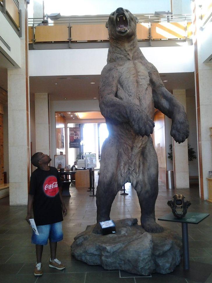rovid orru medve