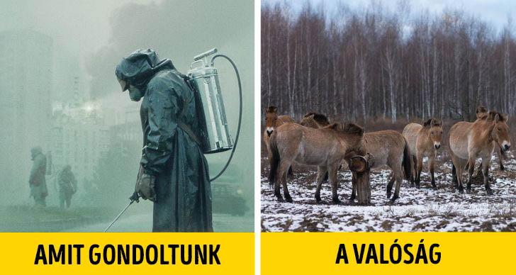 Csernobil termeszet