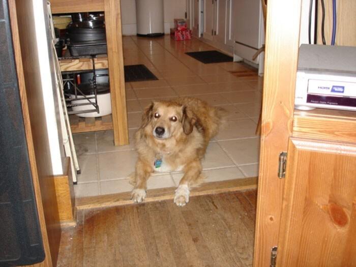 Túlsúlyos kutya