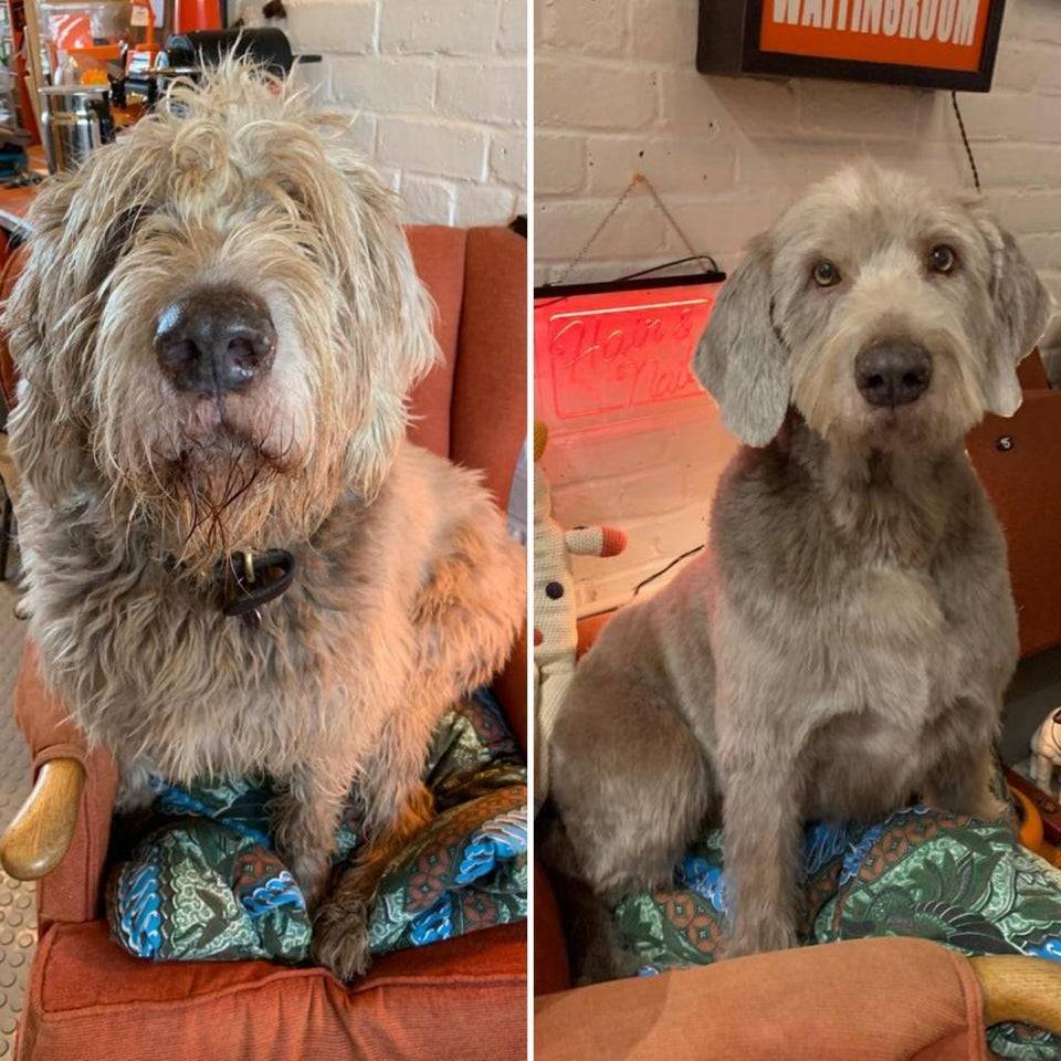 1624950532 my dog before and after a haircut