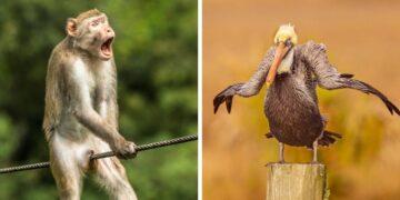 Comedy Wildlife fotóverseny 2021