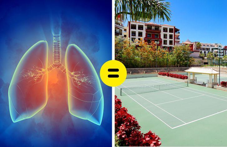 Emberi tüdő teniszpálya