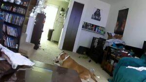 Kutya és akkumulátor