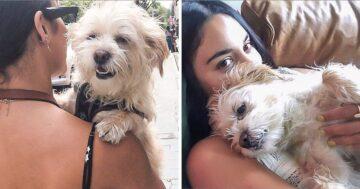 Kutyák mancsa szeretet