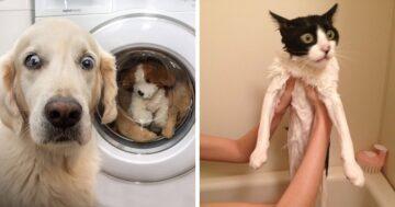 Vicces állatos fotók