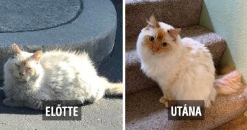 Állatok befogadás előtt és után