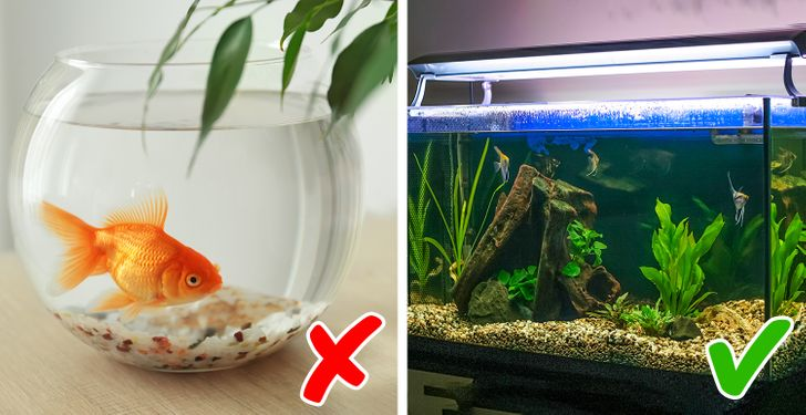 Kerek akvarium