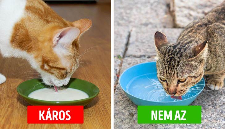 Macskak es a tej