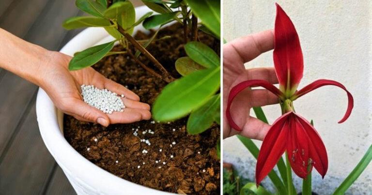 4 trükk, amivel a növényeid egész évben virágozhatnak